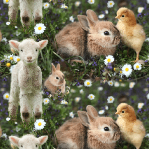 Bunny Rabbit Lola
